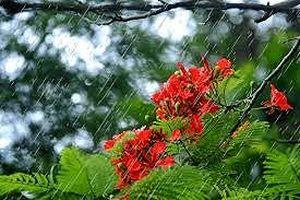 Bắc Bộ mưa nắng gián đoạn, trưa oi nóng
