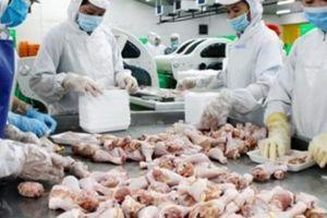 Vừa nhập xong 600 tấn, Nhật muốn nhập tiếp thịt gia cầm Việt Nam