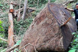 Hàng loạt cán bộ, nhân viên Ban Quản lý rừng phòng hộ Ia Ly bị kỷ luật