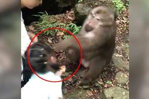 Bị lừa cho thức ăn, khỉ tức giận đấm vào mặt bé gái trả đũa