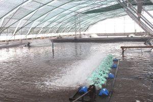 Ứng dụng công nghệ cao vào dự báo thị trường nông sản