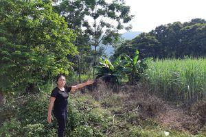 Chuyện kỳ lạ ở Thanh Hóa:một mảnh đất có hai sổ đỏ tại Cẩm Quý, Cẩm Thủy