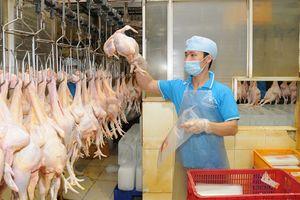 Nhiều sản phẩm chăn nuôi rộng đường xuất khẩu