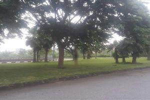 Hải Dương: Nam thanh niên treo cổ trên cây ở khu vực bờ hồ Đại An