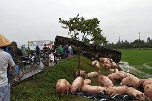 Xe tải đâm nhau nát đầu, hàng trăm con lợn chạy tán loạn trên đường
