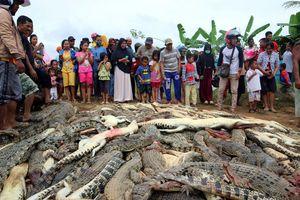 Dân làng tàn sát gần 300 con cá sấu để trả thù một mạng người