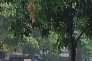 Nghệ An ngập úng, sạt lở đất, Hà Tĩnh phải xả lũ do áp thấp nhiệt đới