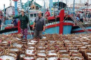 Ngư dân Ninh Thuận 'hốt' cả chục triệu sau một đêm nhờ cá Nam muộn