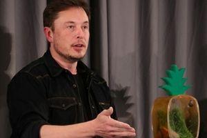 Elon Musk chính thức xin lỗi vì miệt thị thợ lặn giải cứu đội bóng Thái