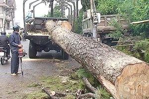 Ảnh hưởng mưa bão, nhiều cây gãy đổ, giao thông ách tắc cục bộ