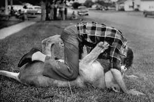 Tròn mắt xem người Mỹ nuôi sư tử như nuôi mèo năm 1955