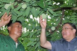 Chủ tịch Hội NDVN: Sớm xây dựng mô hình du lịch 'vườn na' ở xứ Lạng