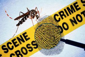 Câu đố: Muỗi cũng tham gia phá án