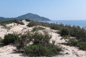 Đất nền chỉ 'bụi cây trong cát trắng' tại Lăng Cô (Thừa Thiên Huế) bất ngờ sốt nóng