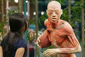 Nhựa hóa cơ thể người: 'Phát minh' vĩ đại, hay vô nhân đạo?