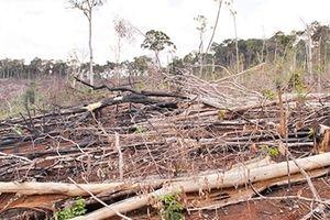 Đua nhau trục lợi từ đất rừng