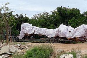 Nguồn gốc cây 'khủng' đang tạm giữ tại Quảng Ngãi không đúng thực tế