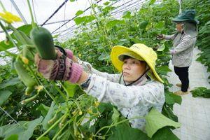 Rộng đầu ra cho nông sản sạch Quảng Nam