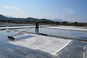 Vùng muối Tuyết Diêm thay đổi tập quán sản xuất tạo ra sản phẩm sạch