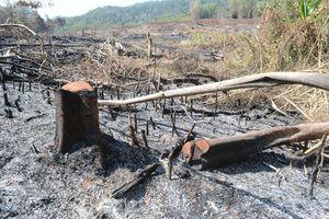 Vụ chặt phá rừng ở Đắk Nông: Phê chuẩn khởi tố thêm một Trưởng phòng Công ty lâm nghiệp