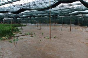 Sơn La: Thiệt hại do mưa lũ tiếp tục gia tăng