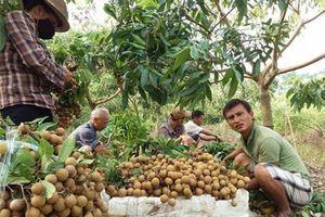 Thị trường nông nghiệp ĐBSH: Trái cây được mùa, giá thấp