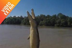 Cá sấu bay khỏi mặt nước đớp mồi như phim kinh dị