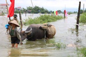 Hà Nội khẩn trương khắc phục hậu quả sau mưa lũ