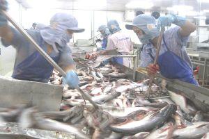 Xuất khẩu cá tra vẫn cậy 'gã khổng lồ'... Trung Quốc