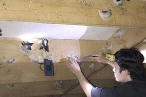 10 nhà nuôi 7 nhà thất bại, vẫn liều bỏ tiền tỷ dụ chim trời về ở