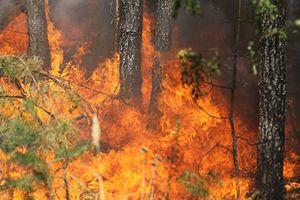 Video, ảnh: Cháy rừng gần thủ đô Hy Lạp chưa thể kiểm soát, số người chết tăng vọt