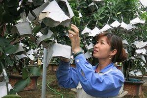 Kỳ 1: Làng quê nghèo 'khoác áo mới' nhờ thay đổi cơ cấu cây trồng