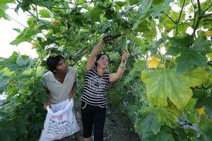 Ấp ủ những mùa trái ngọt