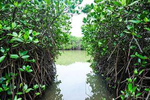 Hải Phòng: Du lịch cộng đồng xã Phù Long, huyện Cát Hải