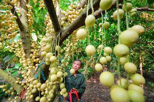 Quy hoạch vùng chuyên canh cây ăn trái