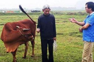 Phê bình, rút kinh nghiệm lãnh đạo xã vụ đóng phí ăn cỏ của trâu bò