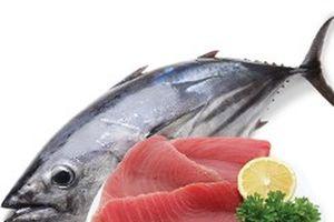 Úc tăng kiểm soát cá ngừ nhập khẩu Bộ Nông nghiệp Úc sẽ đưa cá ngừ nhập khẩu vào kiểm tra và phân tích theo chương trình kiểm soát thực phẩm nhập khẩu (IFIS) với mức tỷ lệ giám sát là 5%.