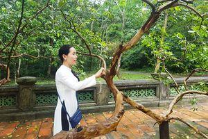 Huyền bí cây ổi biết 'cười' ở di tích Lam Kinh