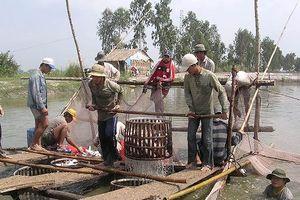 Đồng Tháp hợp tác TPHCM phát triển nông sản chủ lực