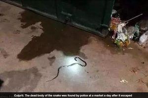 Mua rắn cực độc qua mạng để ngâm rượu, cô gái bị rắn cắn chết