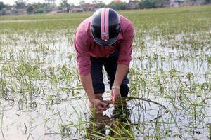 Nghệ An: Nhiều diện tích lúa, màu nguy cơ mất trắng
