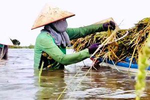 Các tỉnh ĐBSCL đã có phương án đối phó sự cố vỡ đập thủy điện ở Lào