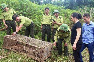 Hà Tĩnh: Thả cá thể trăn gấm nặng hơn 30 kg về môi trường tự nhiên
