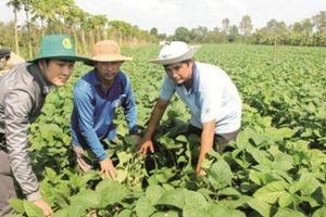 Thị trường thực chất cho đất nông nghiệp
