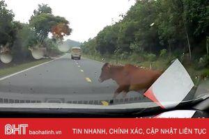 Thế nào là 'chó tránh đầu, trâu tránh đuôi' khi lái ô tô