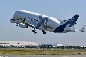 Cận cảnh 'cá voi bay' Beluga XL cất cánh lần đầu tiên