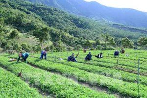 Vì sao nông nghiệp vẫn khó thu hút đầu tư?