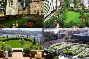 Vườn trên cao - Xu hướng kiến trúc tại các đô thị lớn