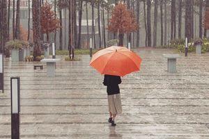 Đà Lạt mùa mưa cũng chẳng buồn mà vẫn tình, vẫn đẹp
