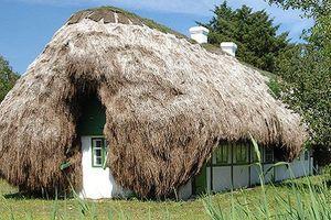 Cách tạo nên một ngôi nhà độc đáo và bền vững bằng rong biển
